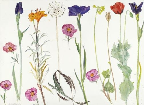 Summer Flowers Dame Elizabeth Blackadder OBE RA RSA RSW RGI