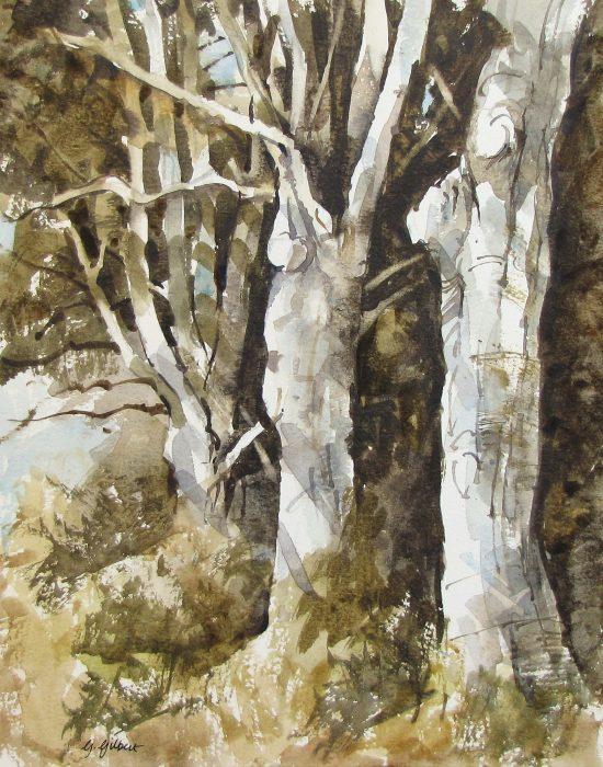 Balcaskie Beeches (watercolour)